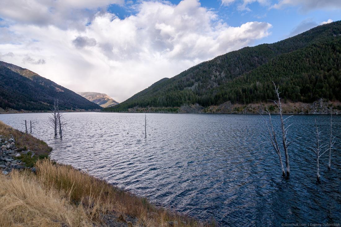 Умершие после землетрясения деревья в горном озере штата Монтана. Dead trees in mountain lake of Montana.