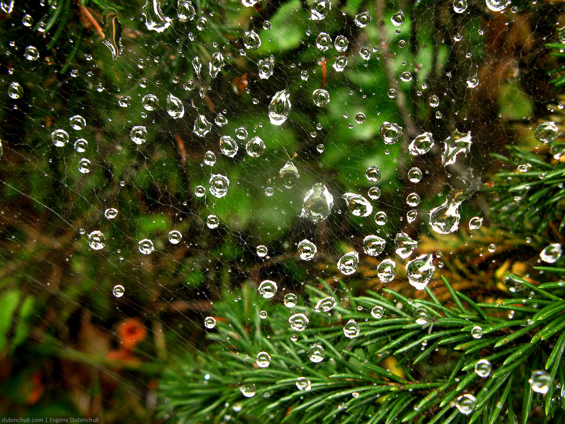 Капельки на паутине. Путешествие на велосипеде в одиночку по Уралу. Waterdrops on spider web