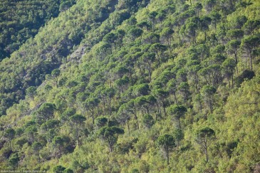 Green trees on steep slope