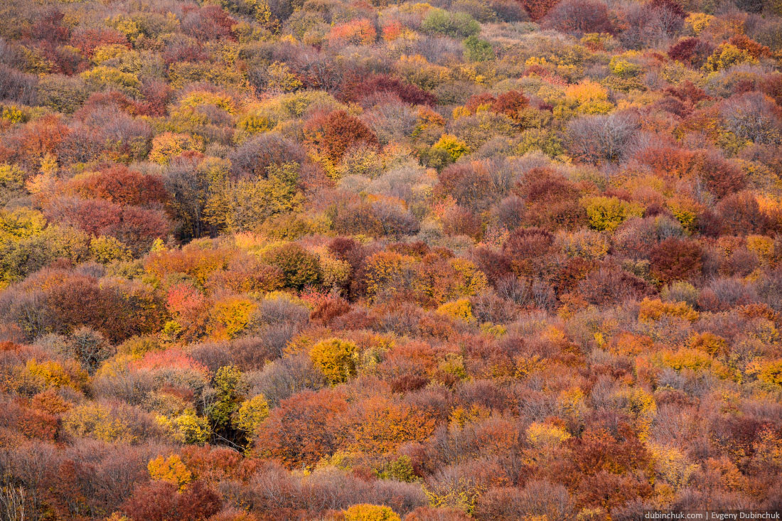 Colorful trees. Autumn in Crimea
