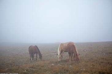 Grazing horses in mist. Crimea