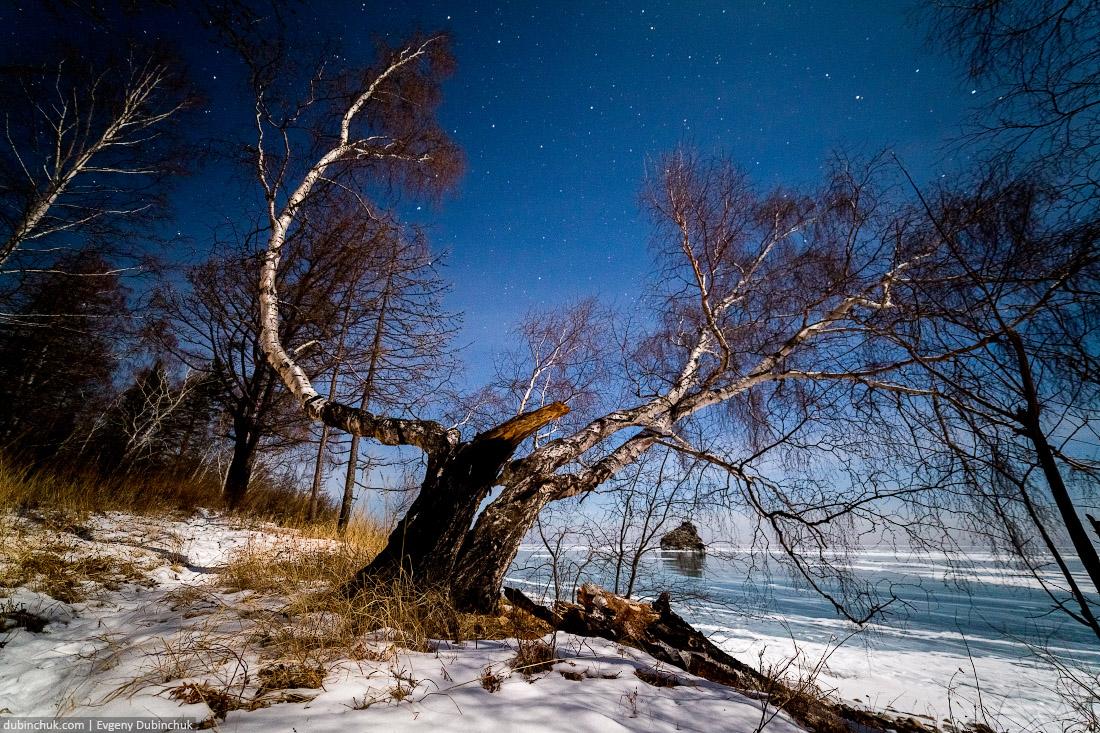 Кривая береза на фоне зимнего Байкала ночью. Вдали виден Бакланий камень. Путешествие на Байкал на коньках. Photo of Baikal lake at night in winter