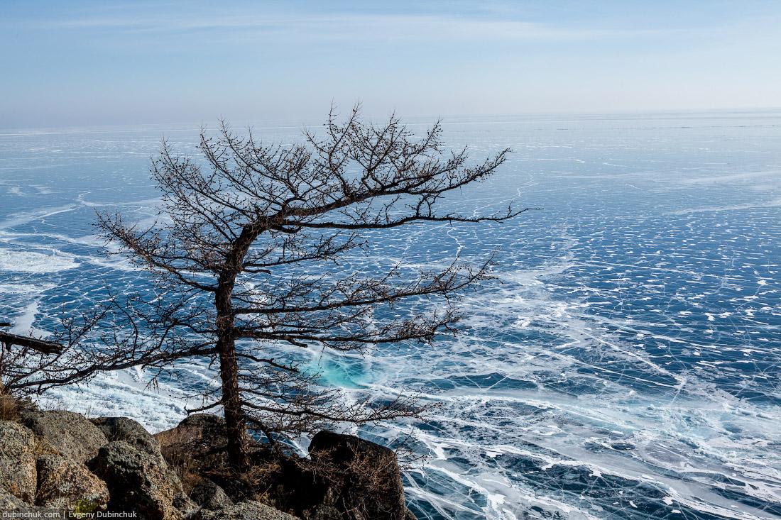 Причудливое дерево и ледовые трещины на Байкале. Вид с высоты птичьего полета - с мыса Большой Колокольный. Путешествие на Байкал на коньках. Baikal in winter. Pure ice. Top view