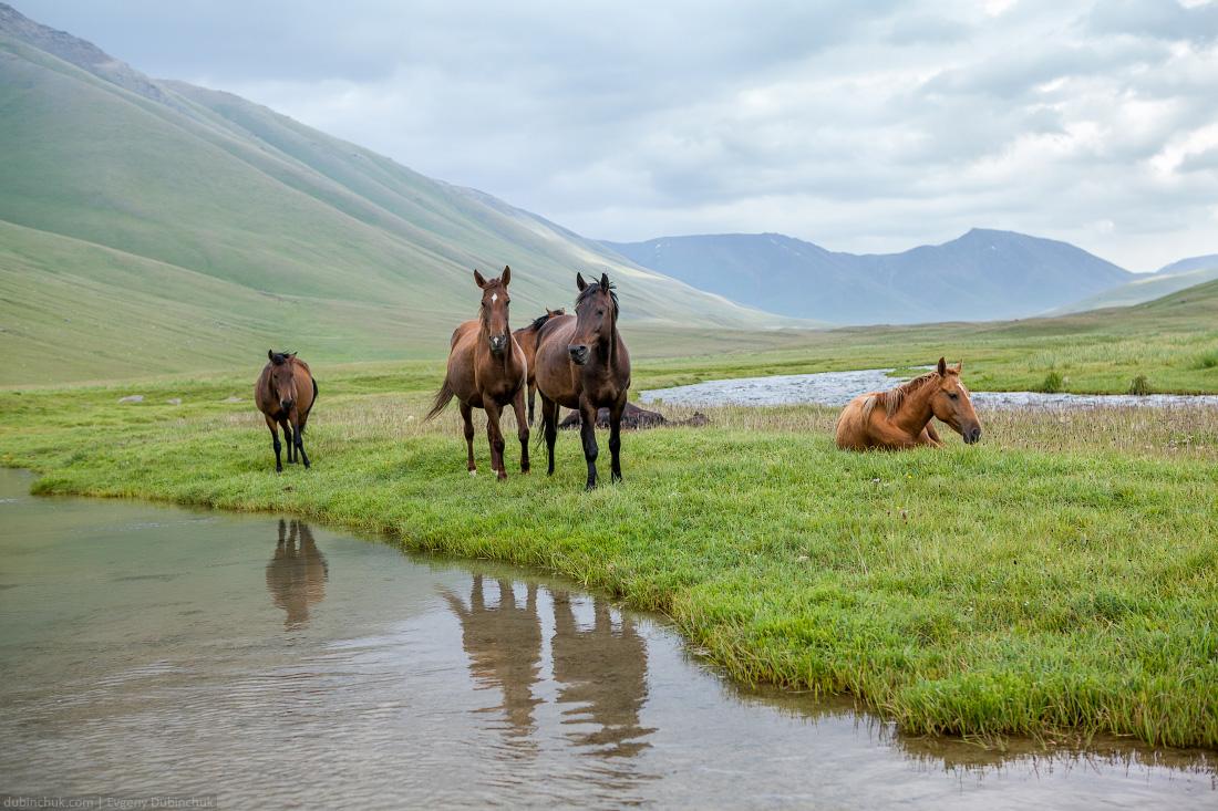 Pasturing horses at river