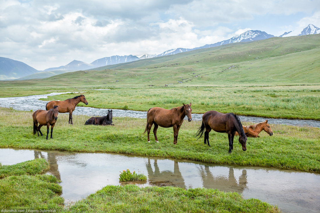 Herd of horses grazing in mountains