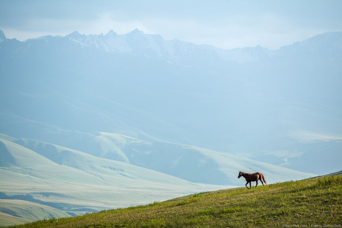 Horse walking in mountains.