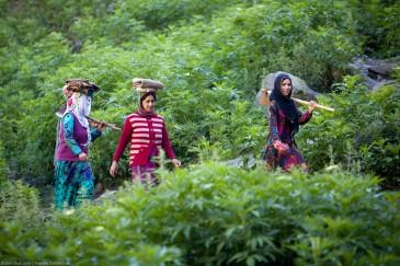 Женщины с топорами. Кашмир, Индия