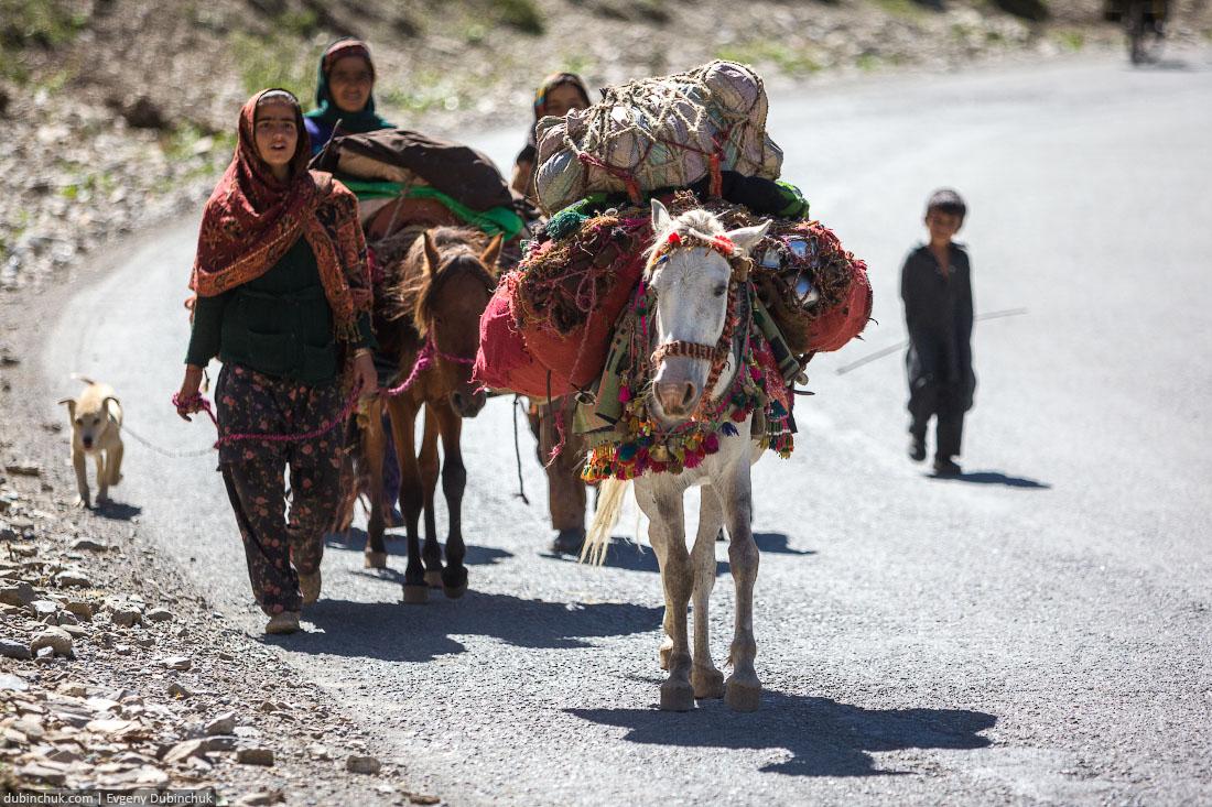 Навьюченные лошади. Северная Индия, Кашмир