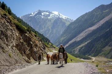 Пастух лошадей в Индийских Гималаях. Штат Джамму и Кашмир