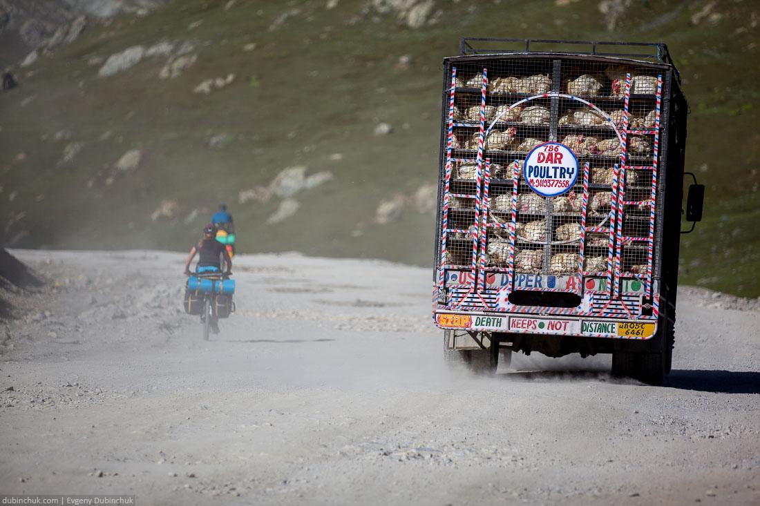 Грузовик с курицами. Индия, Кашмир
