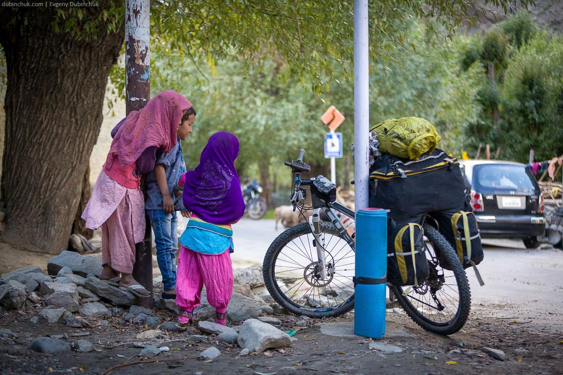 Юные кашмирки с интересом смотрят на велосипед