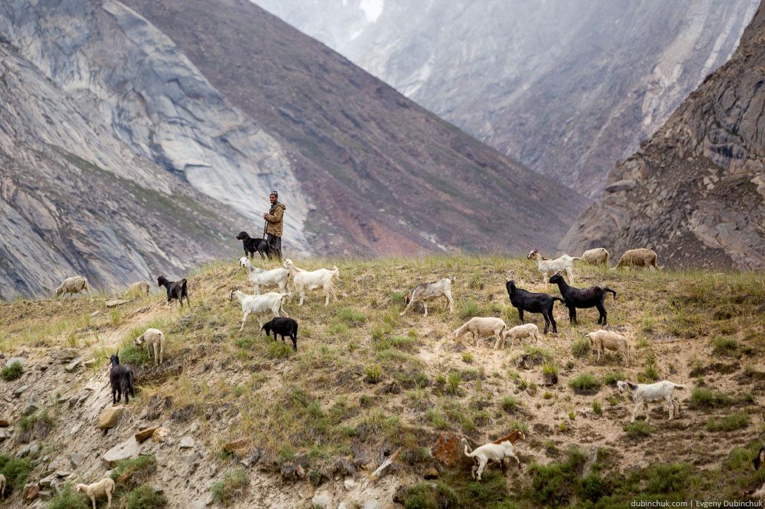 Пастух в Северной Индии. Гималаи, Ладакх
