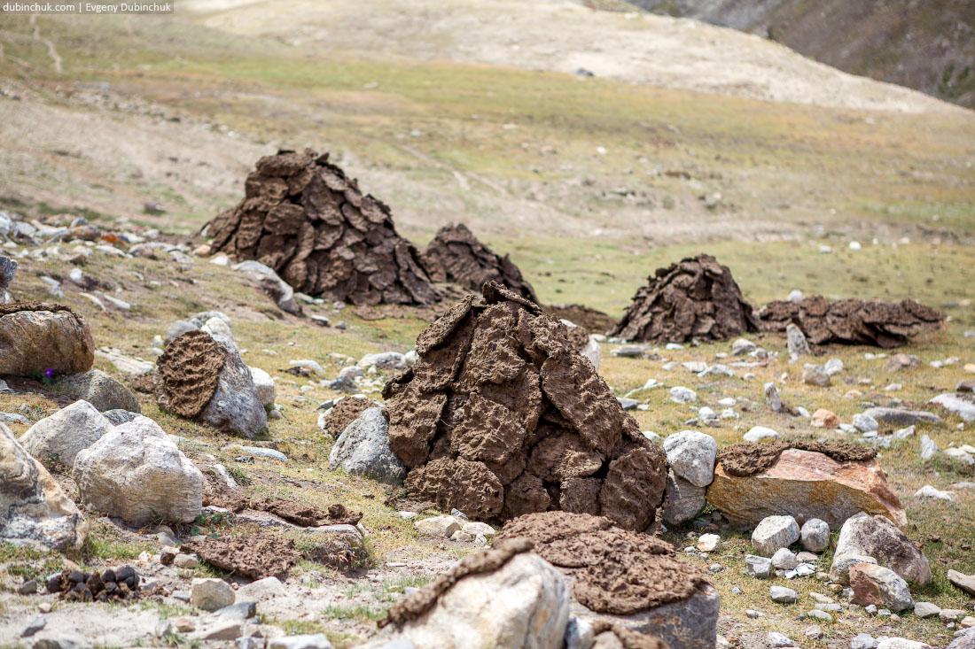 Заготовка кизяка - топлива для обогрева. Гималаи