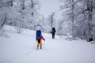 Заснеженные деревья на Урале. Лыжный поход