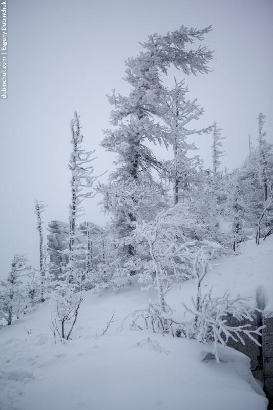Заснеженные деревья в национальном парке Зюраткуль, Челябинская область