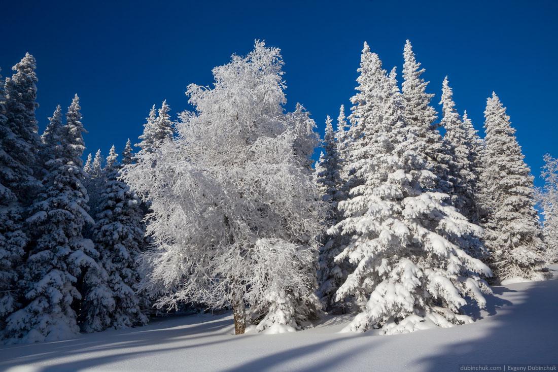 Сказочный лес. Иремель, Южный Урал