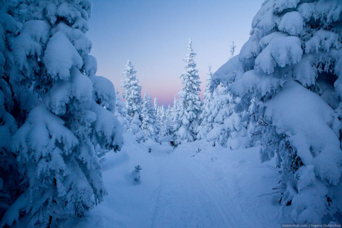 Закат и заснеженные ели на зимнем Урале