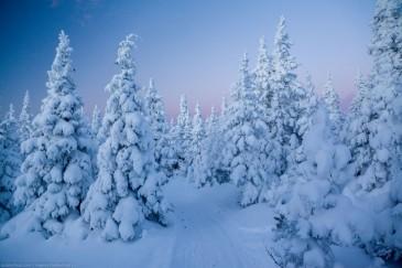 Сказочная снежная тропа между елями с Большого Иремеля