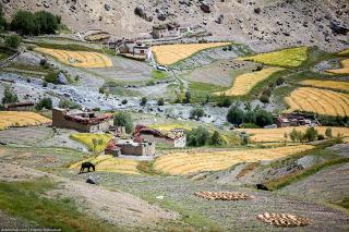 Индийские Гималаи на велосипеде. Лингшед. Часть 6. Indian Himalaya by bike. Lingshed. Part 6.