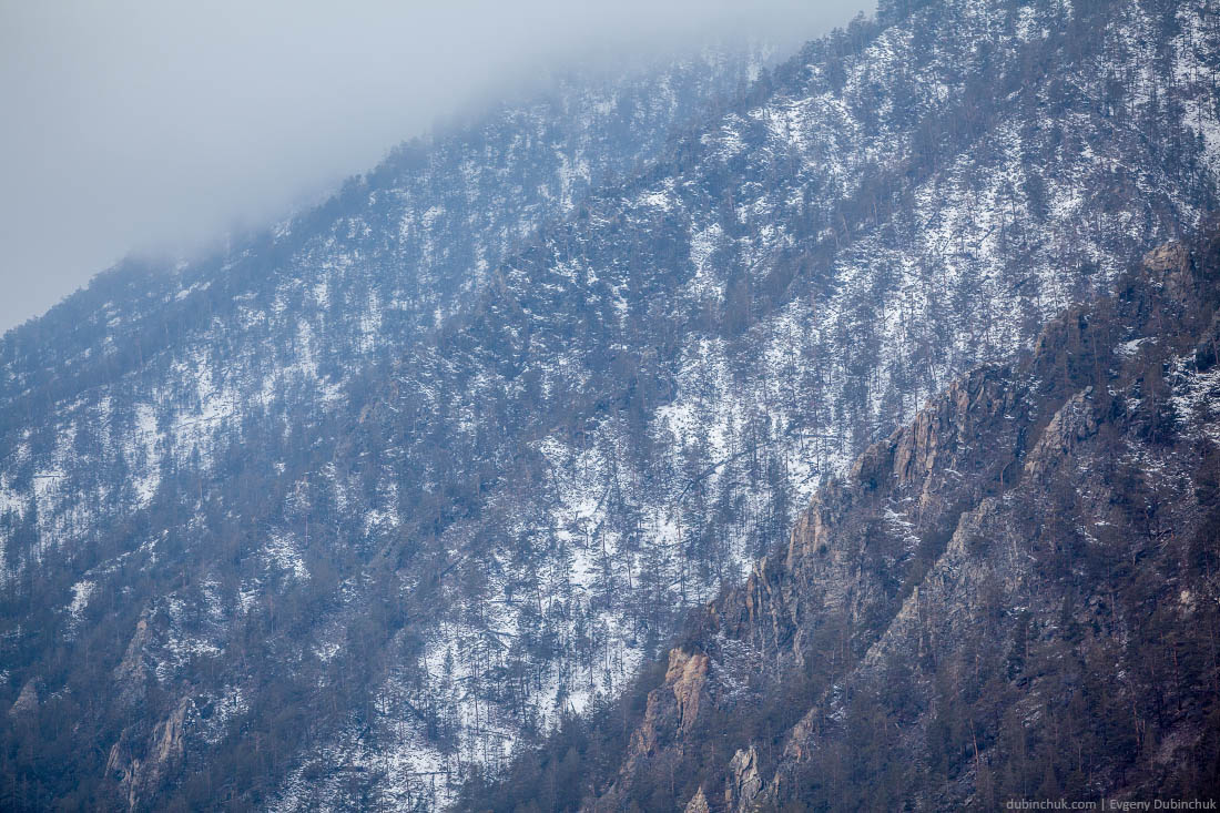 Лес на склонах острова Ольхон зимой. Байкал