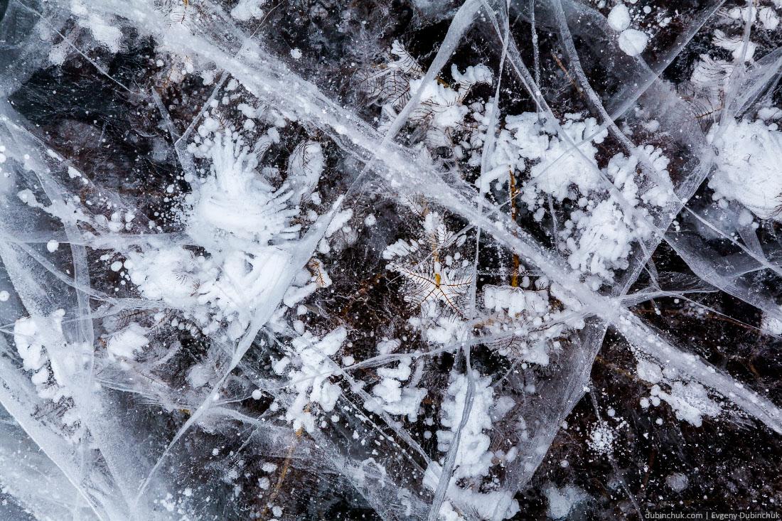 Прибрежная растительность, вмерзшая в лед Байкала. Ice of lake Baikal