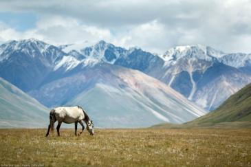 Grazing horse in mountain valley, Tien Shan, Kyrgyzstan