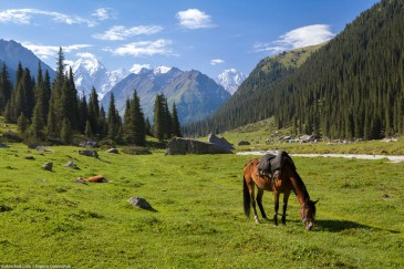 Horse feeding grass, high mountains background, Tien Shan, Kyrgyzstan