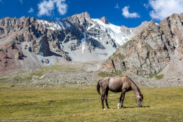 Horse in mountains feeding grass at sunny day, Tien Shan