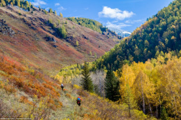 Multicolored autumn in Altai mountains, Russia