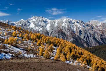 Bright yellow colours of autumn in Tibet